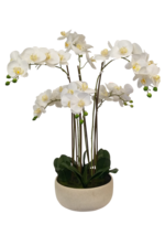 Low Dish Real Touch Potted Orchid